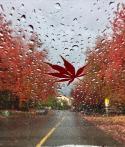 在雨中, 共享雨伞