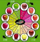 ☘ 一张图告诉你 苹果 种类 酸甜度