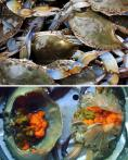「蓝蟹」春天吃最好 有肉又有黄
