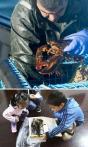 龙虾七年只能长到一磅左右 落网36小时就上中国餐桌