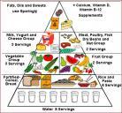 政府推荐的儿童食物结构
