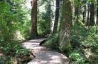 温哥华的登山道和步行道