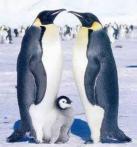 §§° 一家在一起很幸福 企鹅 Penguin
