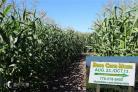 (温哥华) 玉米迷宫 + 南瓜农场