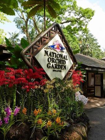 ♘ 新加坡de景点「新加坡植物园」