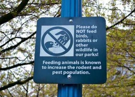市民勿喂雀鸟 招惹老鼠和虫蚁