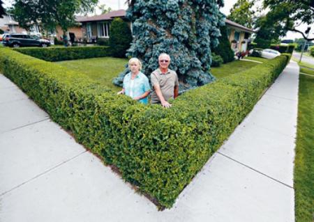 「绿色街道」园艺项目需要义工