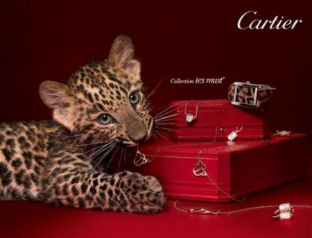 Cartier 广告