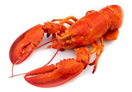 美国加州龙虾出没的季节 (图)